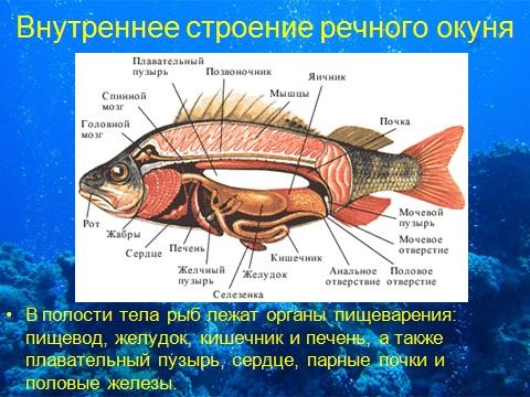 рыбы водные организмы