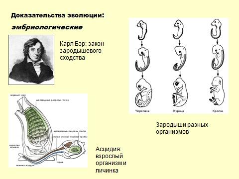 теория Дарвина об эволюции