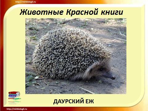 красная книга России - животные