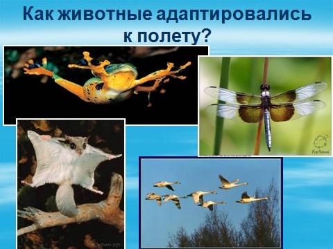 Презентация на тему адаптация органима человека к полету