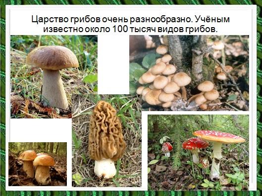 грибы в презентации по биологии 6 класса
