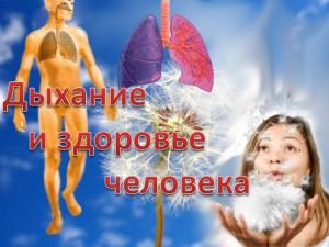 дыхательная система человека в презентации по биологии