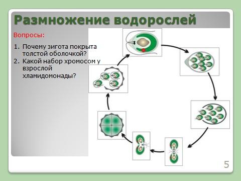 Как применяется презентация