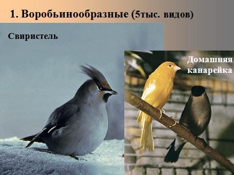 презентация на тему отряды птиц