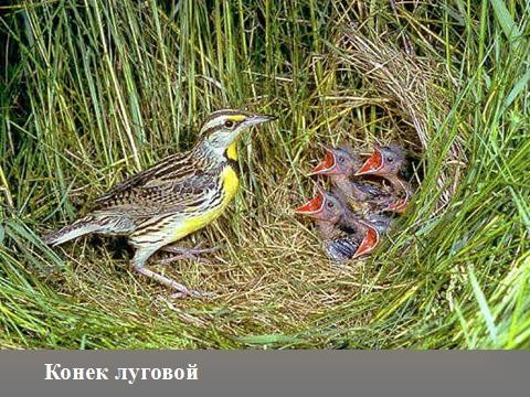 Презентация по биологии на тему отряды птиц