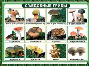 съедобные грибы в презентации по биологии 6 класса
