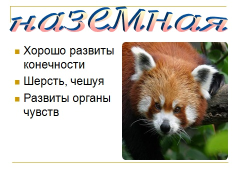 Презентации по биологии 7 класс Зоология Введение