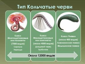 Презентация по биологии на тему кольчатые черви