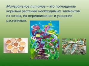 зоны корня в презентации по биологии