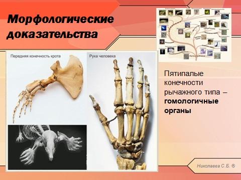 Доказательства эволюции в презентации по биологии powerpoint