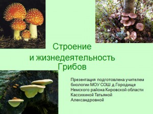 Строение грибов в презентации powerpoint по биологии