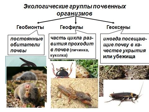 Презентация на тему животные почвы