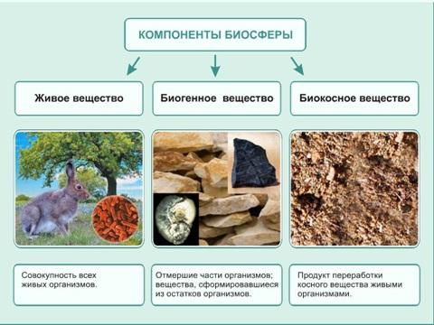 Пирамиды биомассы в биосфере