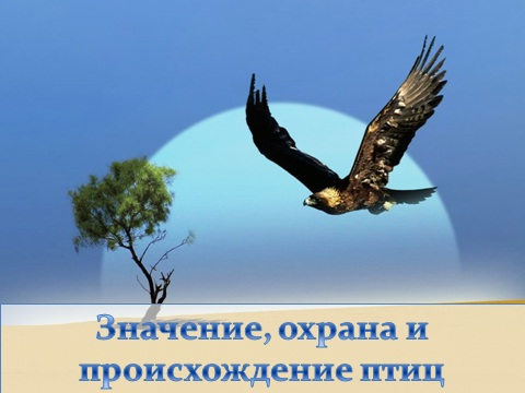 охрана птиц презентация по биологии