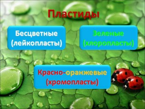 Растительная клетка урок биологии в 6 классе