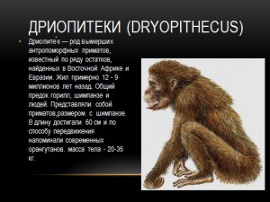 Антропогенез - развитие человека
