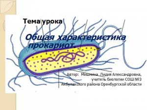 бактерии прокариоты