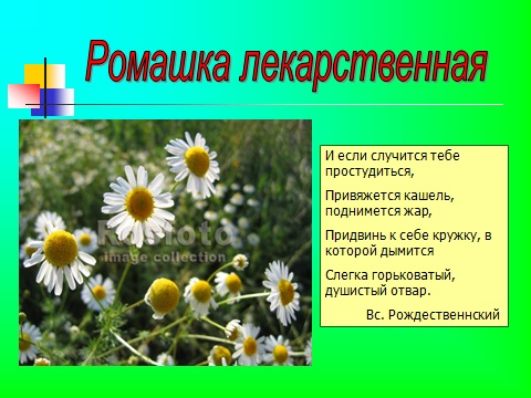 Презентация на тему Зеленая аптека