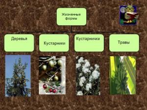 растительность в презентации по биологии