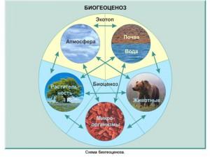 Экосистема в презентации по экологии