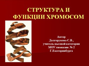 Презентация powerpoint хромосомы