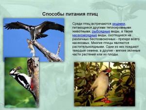 Птицы и их строение презентация биологии