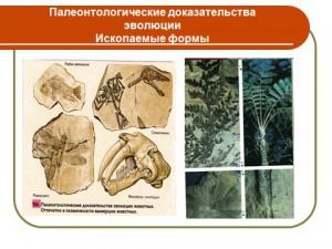 Презентация на тему доказательства эволюции