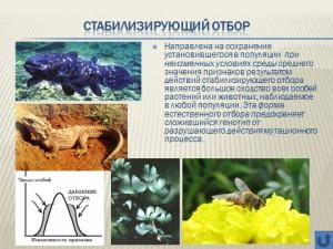 Презентация на тему естественный отбор