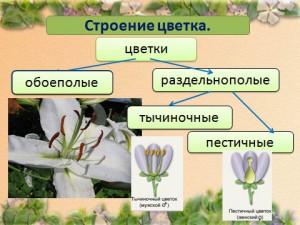 Презентация на тему строение цветка