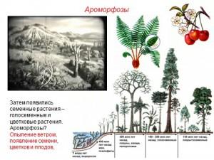 Презентация биологический прогресс