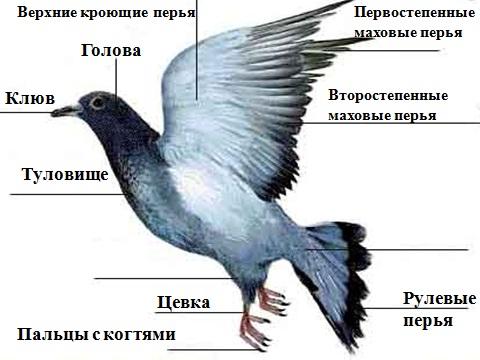 Презентация на тему птицы