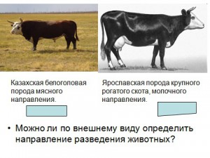 селекция животных