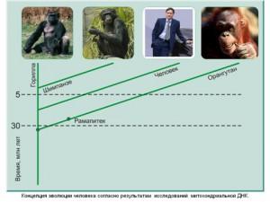 Презентация на тему эволюция человека