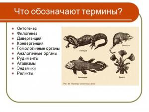 Презентация доказательства эколюции живого