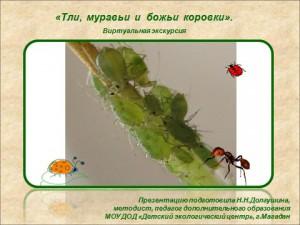 Презентация на тему вредители комнатных растений