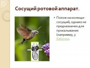 Скачать презентацию строение насекомых