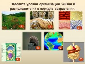 презентация происхождение видов