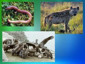 Презентация питание животных