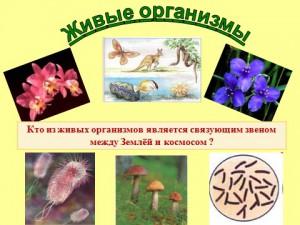 Презентация живые организмы скачать бесплатно