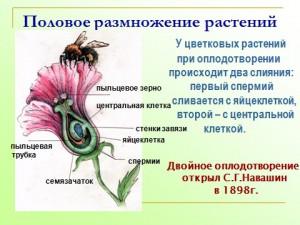 скачать бесплатные презентации про размножение