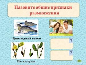презентация на тему размножение