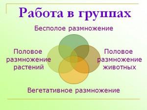 презентация на тему размножение растений
