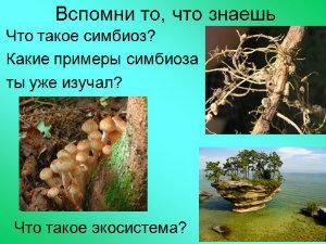 презентация по ботанике